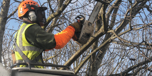 Clive Richards Tree Surgery